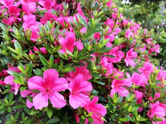 住吉公園「花」